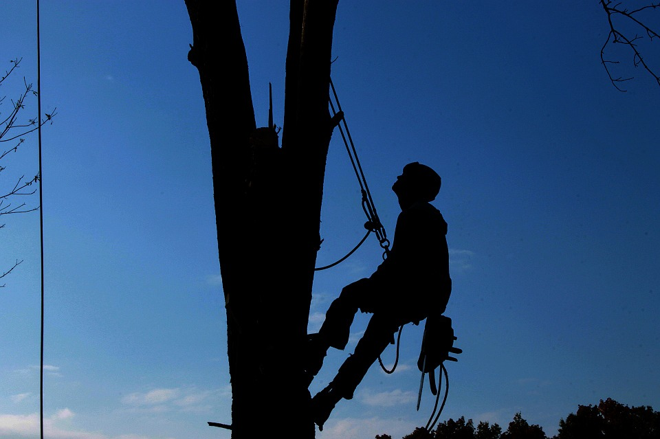 Tree Felling In Durban