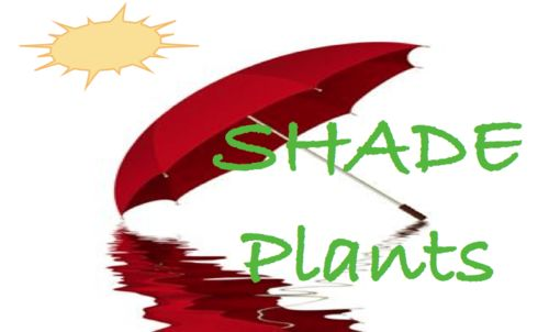 Plant info shade plants by msdebbiep gardentenders - Vegetable garden zone 5a ...