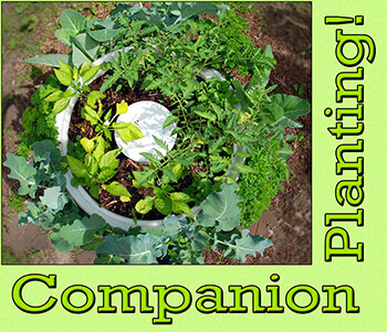 Companion Planting Guide Resource Page