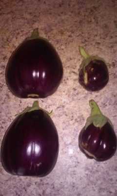 2 large eggplant fruit next to 2 small eggplants