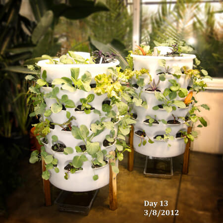 Garden Tower on Day 13 of Growing