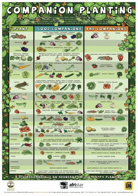 Companion planting guide for organic gardening.