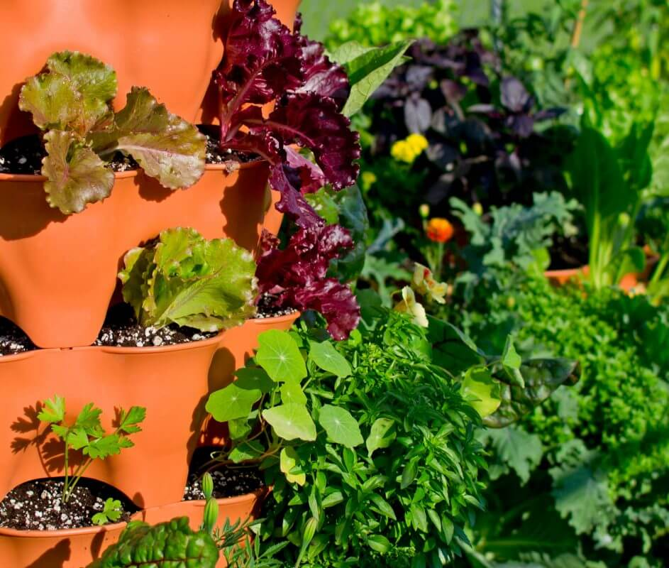 interactive drag drop planting designer and salad tower sample planting plan - Garden Tower Project