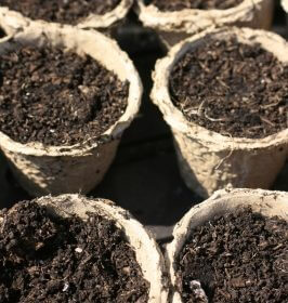 Plant Pots are a great place to start seeds.
