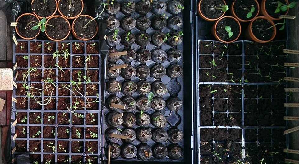 Seedlings are fun to grow!
