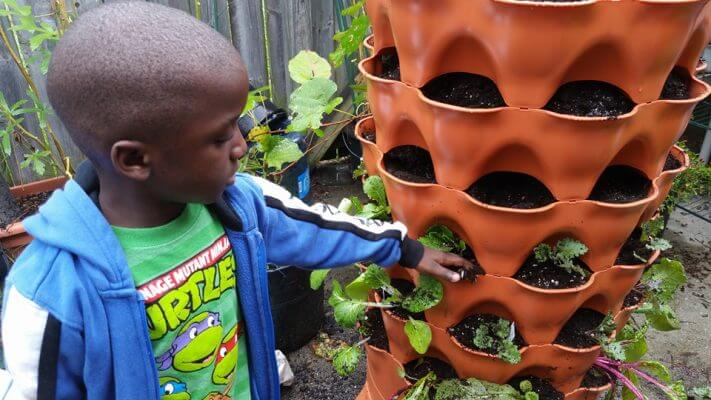 Gardening at home homeschooling