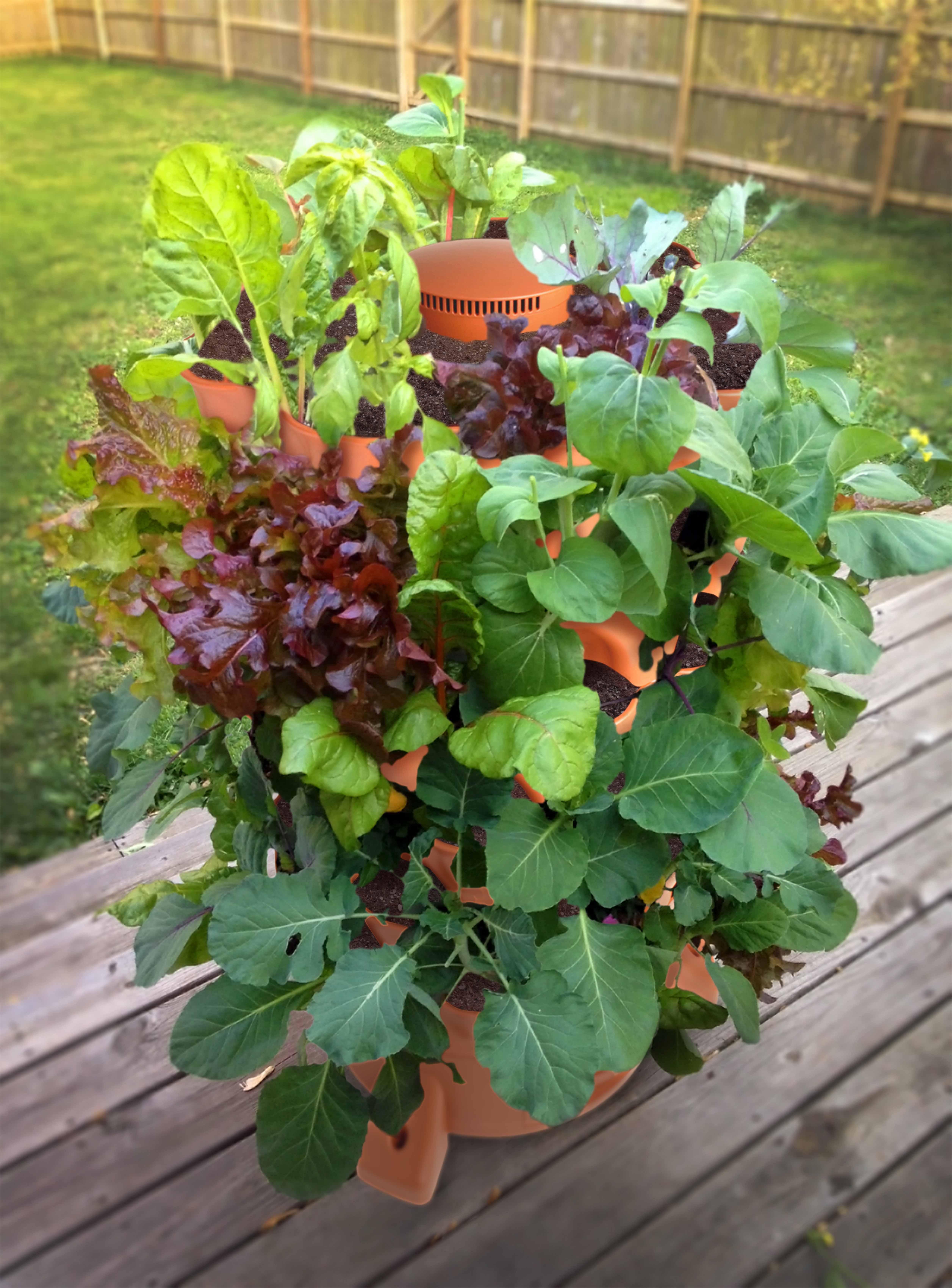 gardening vertical vegetable garden new for invented were beginnings gardeners