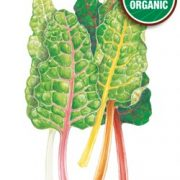 3114i_Swiss-Chard-5-Color-Silverbeet-ORG