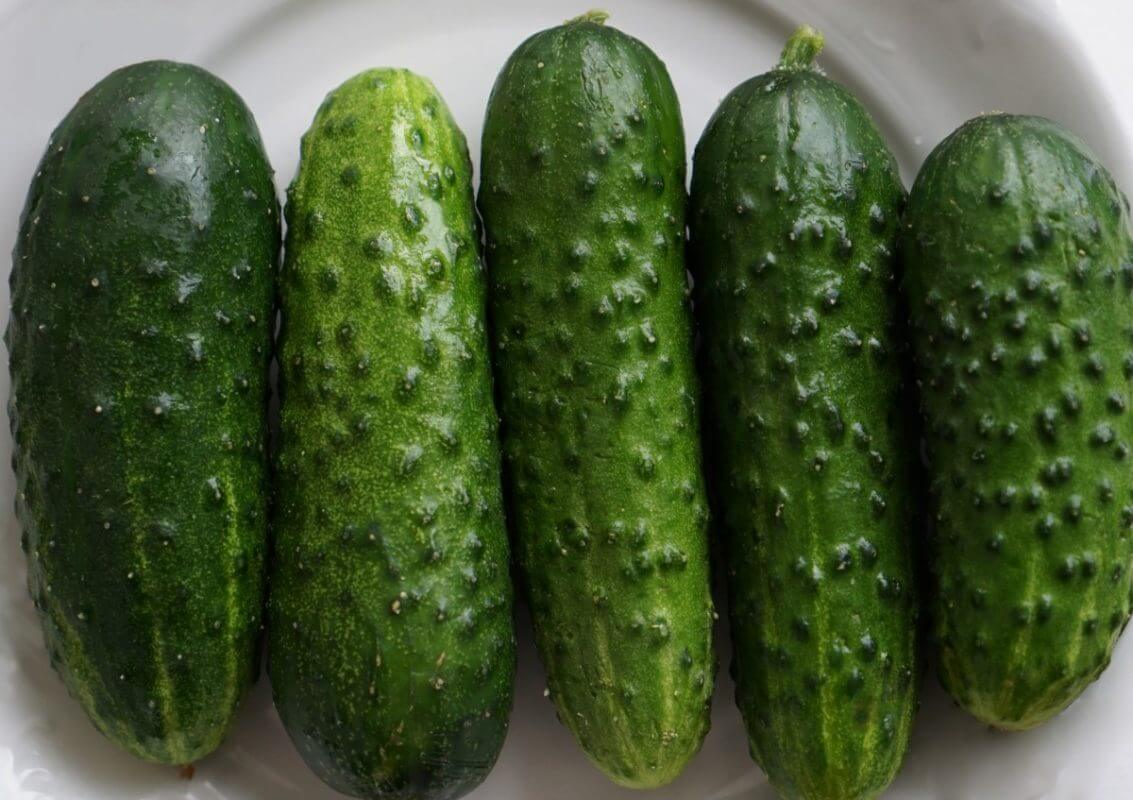 starting and growing cucumbers garden tower project