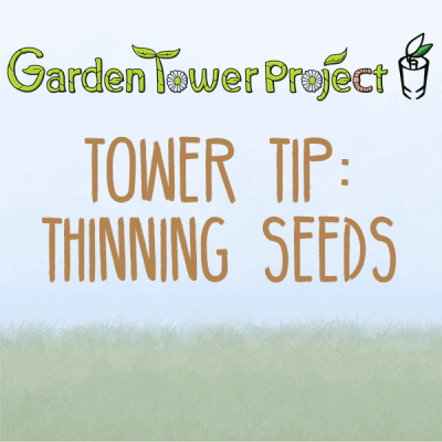 GTP-tower-tips-02-thinning-seeds