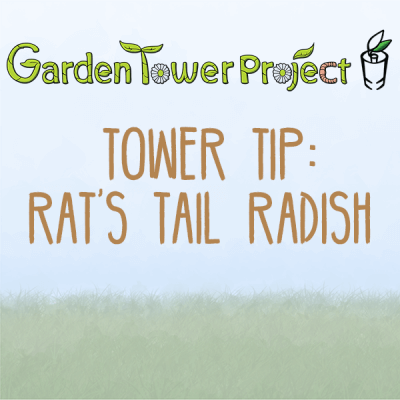 Tower Tip: Rat's Tail Radish