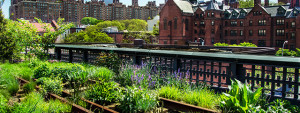 See the High Line in Chelsea