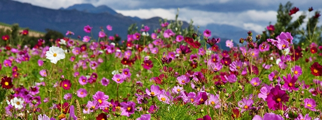 Cape Town Flowers in Africa is a new UNESCO World Heritage Site