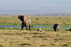 What to know before your Kenyan safari