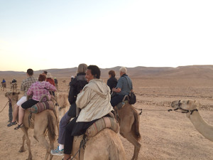 Riding camels in the Bedouin desert