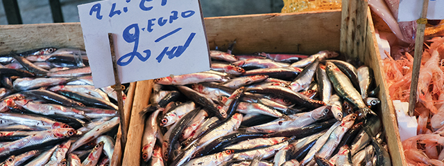 Sample anchovies in Liguria, Italy