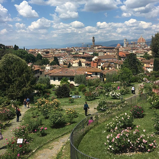 Rose garden in Florence, Italy
