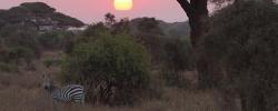 Seeing Africa on safari