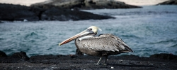 Our 5 favorite animals in the Galápagos Islands
