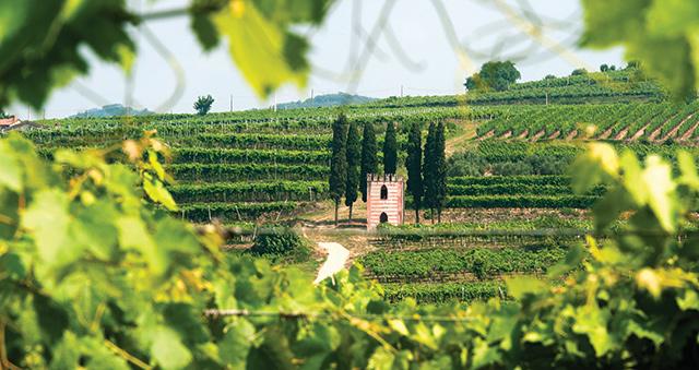 Alghieri vineyards in Northern Italy