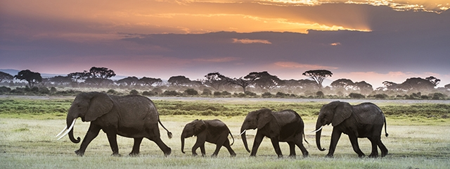 Amboseli National Park in Kenya
