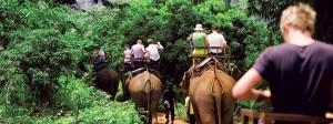Elephant ride through the jungle
