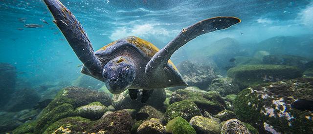 Galapagos Island, Ecuador
