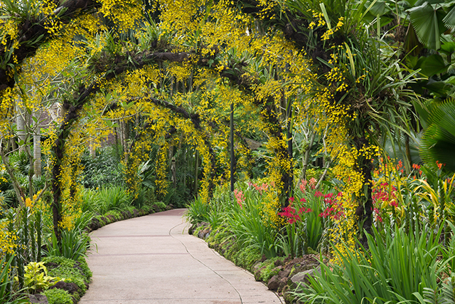 Exceptional Botanical Garden Singapore