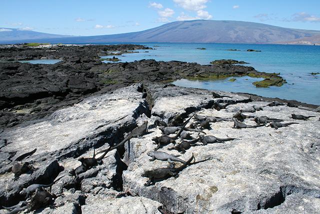 Isabela Island, Galapagos