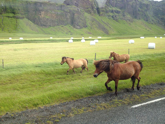 Ef Go Ahead Tours Travel Blog: 10 Surprising Facts About Iceland