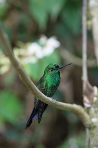 Costa Rica's hummingbirds are small in size, but rich in colors