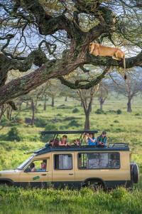 Serengeti, Kenya Safari Lions