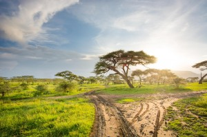 Taking off for a game drive in the Serengeti