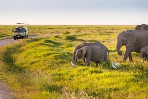 Passing by a heard of elephants on safari in Amboseli National Park