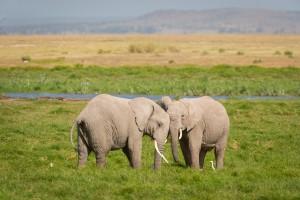 Elephants in Aberdare National Park
