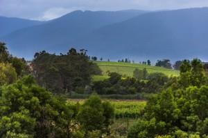 Lush vineyard landscapes of Australia's Yarra Valley