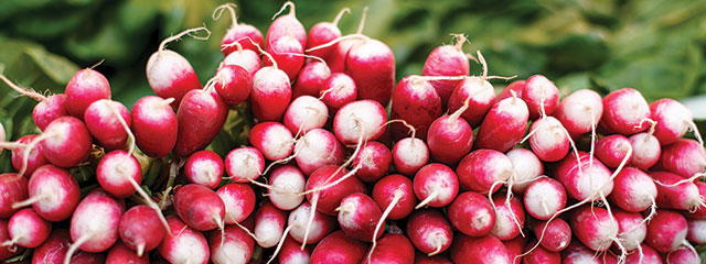 Radishes at the market in France