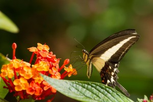 The bold colors of Iguassu Falls' floral and fauna