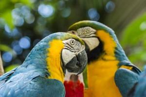The vibrant colors of the Iguassu Falls Bird Park