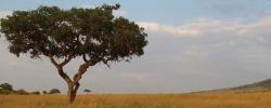 10 Incredible safari snapshots