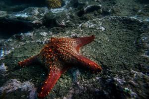 A starfish on the ocean floor
