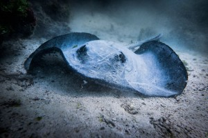 What creatures will you meet in the waters of the Galápagos?