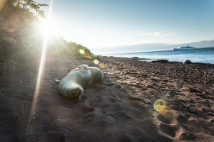 A sea lion sunbathing on the shores of the Galápagos