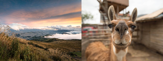 Llama-Mountain- Quito-Ecuador