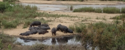One day in… Kruger National Park, South Africa