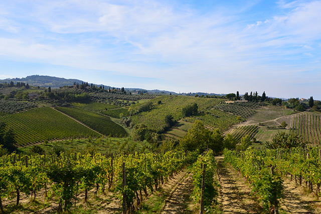 Rolling hills and vineyards in San Gimignano