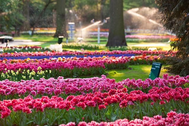 Delicieux Keukenhof Garden Amsterdam Netherlands