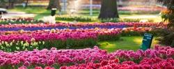Fresh flowers & scenic cities