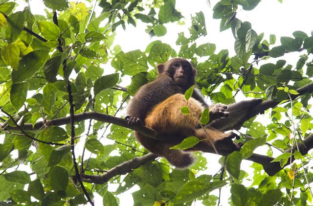 04_monkey