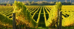 Trends in Travel: 5 must-visit wine regions